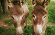 2 Mule Ranch