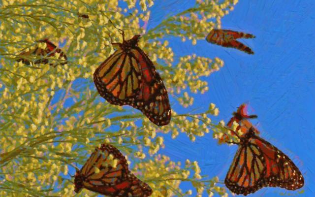 Eco-Flex: Butterfly