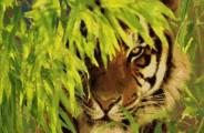 Tiger Museum